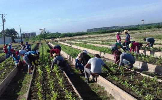 Recovery actions in Camagüey´s organic crop installations