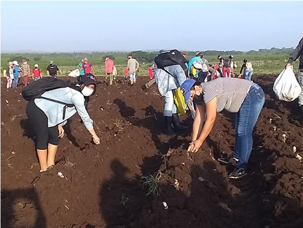 Estudiantes y trabajadores apoyan producción de alimentos en Najasa, Camagüey (+ Fotos)
