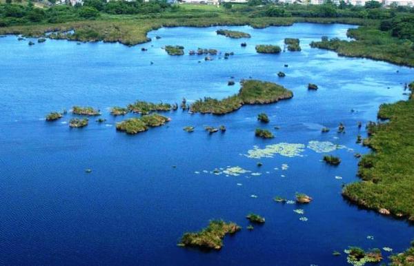 Humedales 2017 insta a la conservación de las turberas en el Caribe