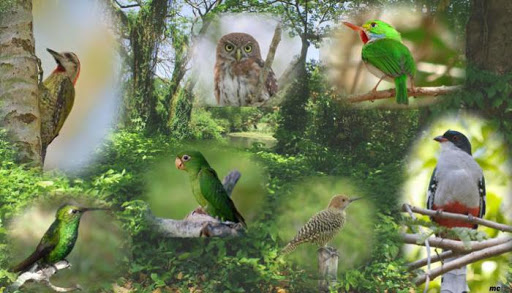 Le plan gouvernemental pour la protection de la faune est approuvé à Cuba