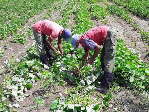 Respalda la ACTAF capacitación y producción de alimentos ante la Covid-19