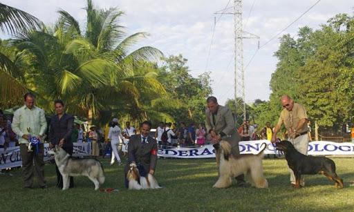 Federación Cinológica de Cuba anuncia calendario de eventos