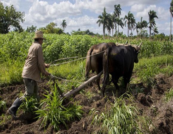 Continúa en Camagüey la entrega de tierras en usufructo gratuito
