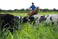 Aplican camagüeyanos proyecto de Adaptación ganadera al cambio climático