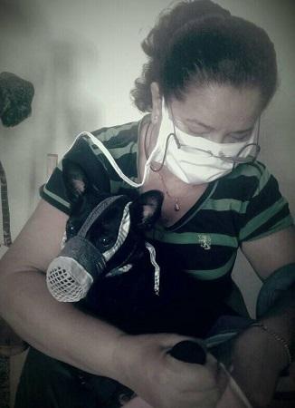 Medicina Veterinaria: una profesión de amor a los animales