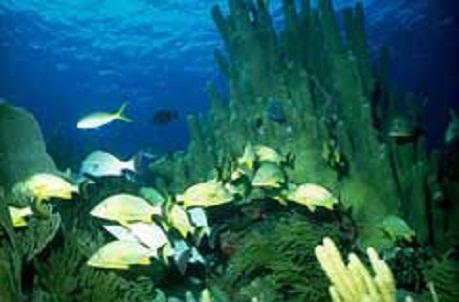 Especialistas comprueban efectos positivos de reserva marina cubana