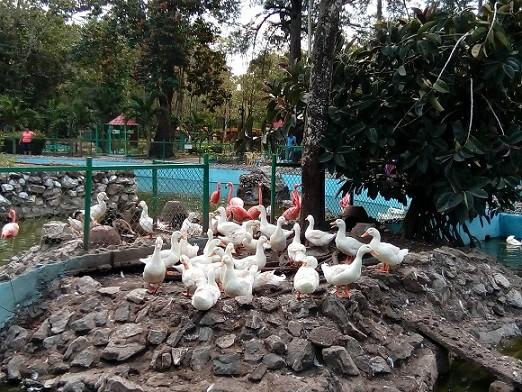 Celebra parque zoológico de Camagüey segundo aniversario